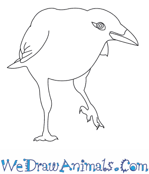 How to Draw a Carrion Crow in 6 Easy Steps