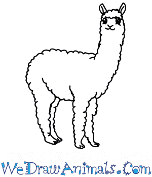 How to Draw a Cartoon Alpaca in 5 Easy Steps