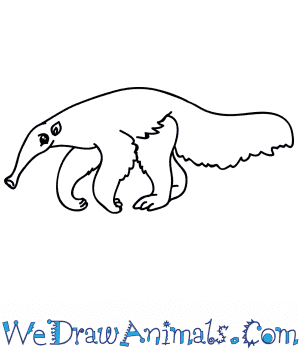 How to Draw a Cartoon Anteater in 6 Easy Steps
