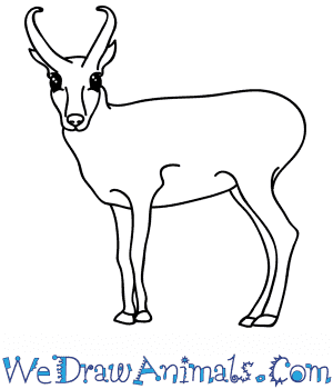 How to Draw a Cartoon Antelope in 6 Easy Steps