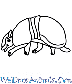 How to Draw a Cartoon Armadillo in 6 Easy Steps