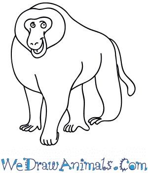 How to Draw a Cartoon Baboon in 8 Easy Steps
