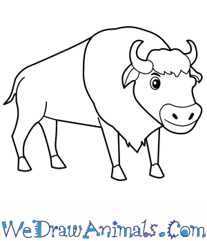 How to Draw a Cartoon Bison in 8 Easy Steps