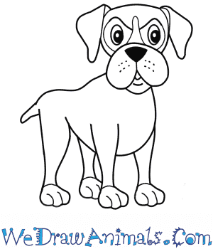 How To Draw A Cartoon Boxer Dog