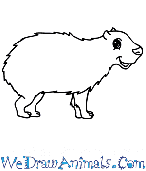 How to Draw a Cartoon Capybara in 5 Easy Steps