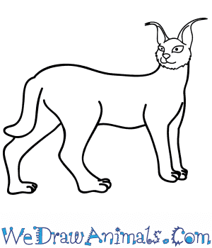 How to Draw a Cartoon Caracal in 7 Easy Steps