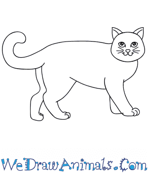 How to Draw a Cartoon Cat in 8 Easy Steps