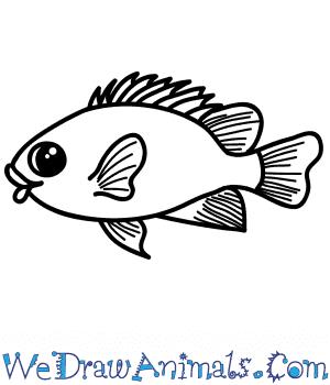 How to Draw a Cartoon Damselfish in 5 Easy Steps