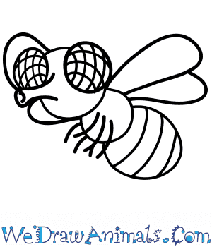 How to Draw a Cartoon Fly in 6 Easy Steps