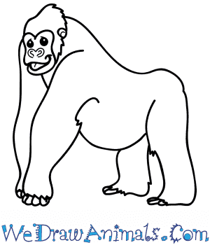 How to Draw a Cartoon Gorilla in 7 Easy Steps
