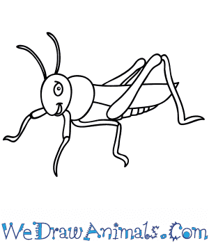 How to Draw a Cartoon Grasshopper in 9 Easy Steps