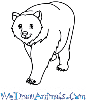 How to Draw a Cartoon Grizzly Bear in 6 Easy Steps