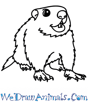 How to Draw a Cartoon Groundhog in 6 Easy Steps
