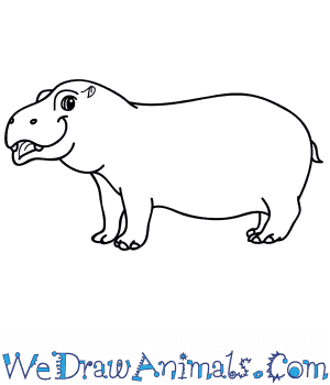 How to Draw a Cartoon Hippopotamus in 8 Easy Steps