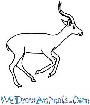 How to Draw a Cartoon Impala in 6 Easy Steps