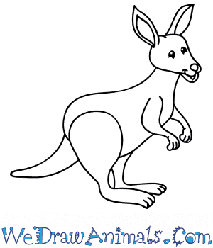 How to Draw a Cartoon Kangaroo in 9 Easy Steps