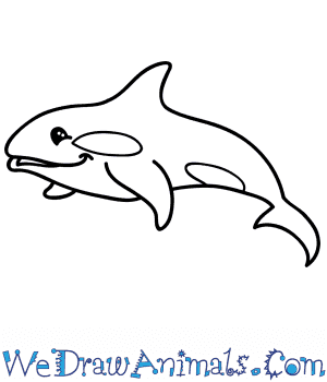 How to Draw a Cartoon Killer Whale in 8 Easy Steps