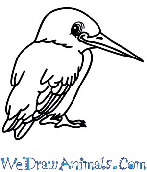 How to Draw a Cartoon Kingfisher in 7 Easy Steps