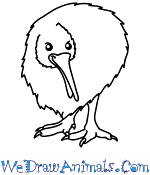 How to Draw a Cartoon Kiwi in 5 Easy Steps
