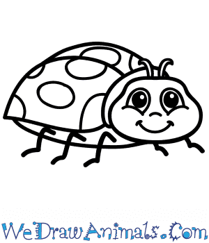 How to Draw a Cartoon Ladybug in 9 Easy Steps