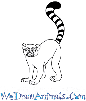 How to Draw a Cartoon Lemur in 10 Easy Steps