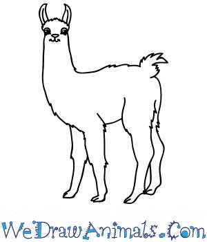 How to Draw a Cartoon Llama in 5 Easy Steps