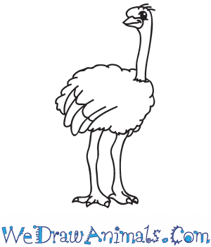 How to Draw a Cartoon Ostrich in 6 Easy Steps