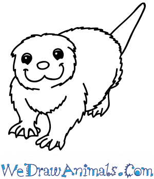 How to Draw a Cartoon Otter in 6 Easy Steps