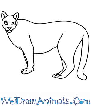 How to Draw a Cartoon Puma in 6 Easy Steps