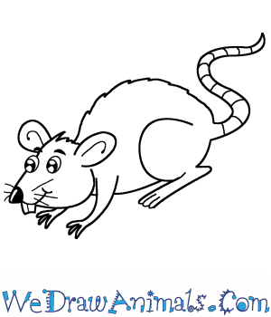 How to Draw a Cartoon Rat in 6 Easy Steps