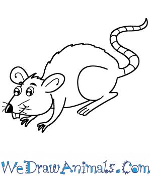 How To Draw A Cartoon Rat