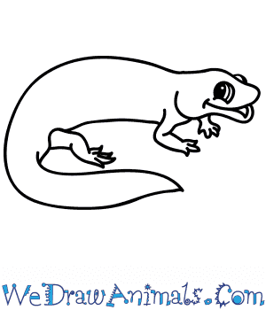 How to Draw a Cartoon Salamander in 5 Easy Steps