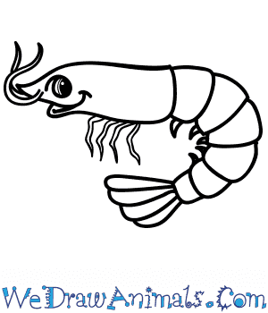 How to Draw a Cartoon Shrimp in 6 Easy Steps