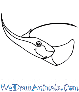 How to Draw a Cartoon Stingray in 5 Easy Steps