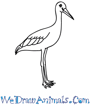 How to Draw a Cartoon Stork in 6 Easy Steps