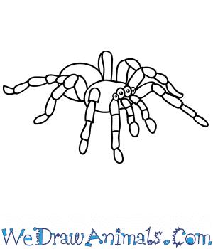 How to Draw a Cartoon Tarantula in 6 Easy Steps
