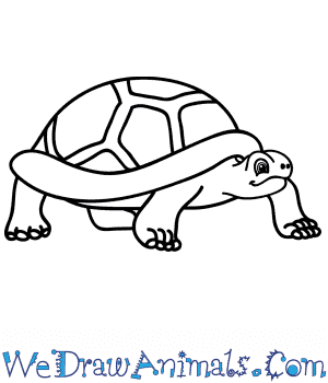 How to Draw a Cartoon Tortoise in 5 Easy Steps