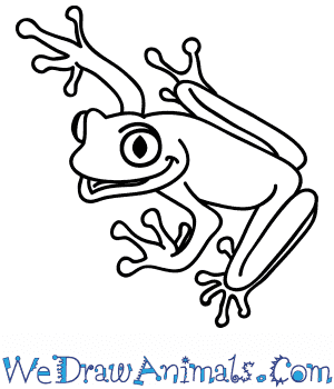 How to Draw a Cartoon Tree Frog in 5 Easy Steps
