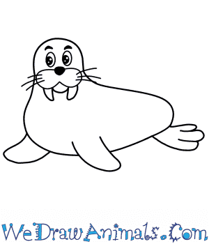 How to Draw a Cartoon Walrus in 5 Easy Steps