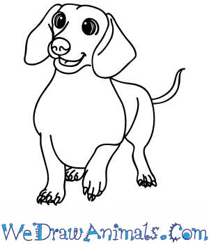 How to Draw a Cartoon Wiener Dog in 7 Easy Steps