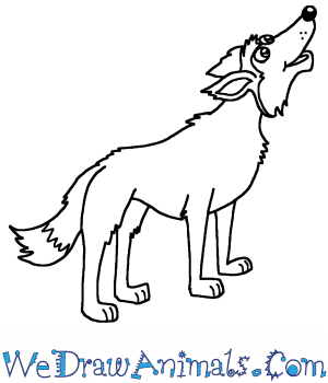 How to Draw a Cartoon Wolf Howling in 6 Easy Steps