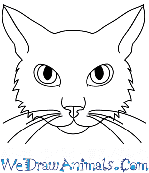 How to Draw a Cat Face in 10 Easy Steps