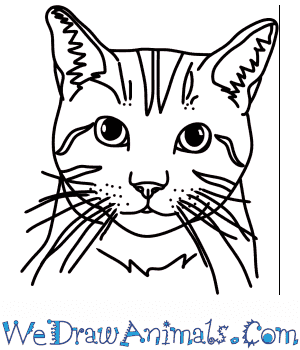 How to Draw a Cat Head in 4 Easy Steps