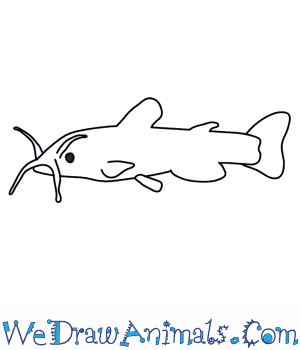 how to draw a catfish Circulatory System Diagram Labeled