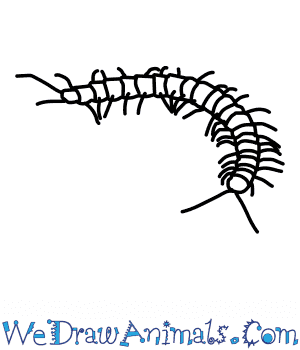 How to Draw a Centipede in 5 Easy Steps