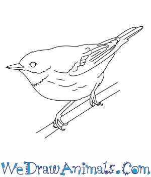 How to Draw a Cerulean Warbler in 6 Easy Steps