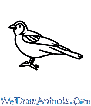 How to Draw a Chaffinch in 7 Easy Steps