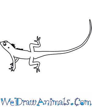 How to Draw a Changeable Lizard in 6 Easy Steps