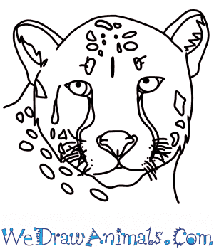 How to Draw a Cheetah Head in 7 Easy Steps