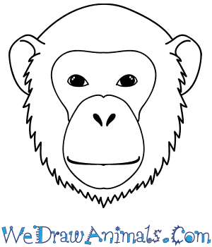 How to Draw a Chimpanzee Face in 9 Easy Steps